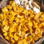 MUSHROOMS 8KG PICKED BY CONNOR & ALAN 14.08.14